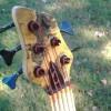 5 String Buckeye Burl